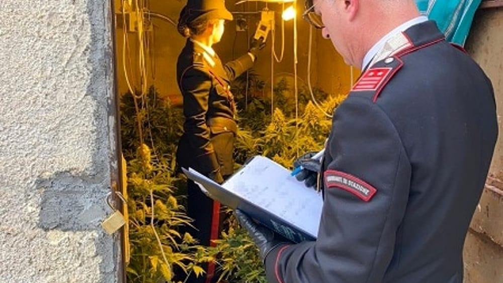 marijuana2-4