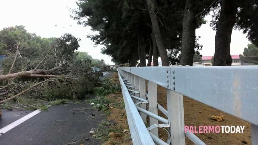 Maltempo e vento: alberi caduti sulla Palermo-Catania