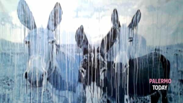 a palermo l'esposizione d'arte contemporanea 'scecchiscè' di giampaolo de filippi-3