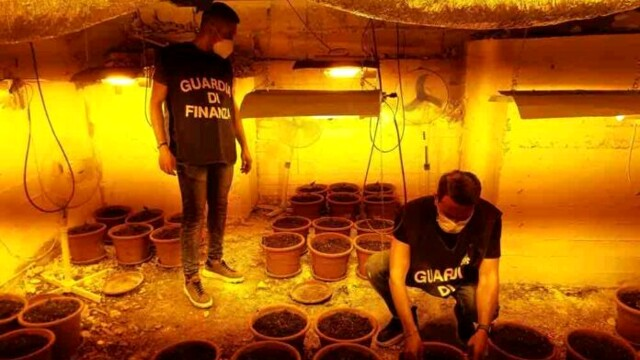 Marijuana plantation in a basement in Borgo Nuovo, an arrest is triggered thumbnail