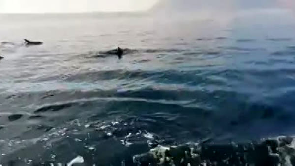 VIDEO | Sorpresa in acqua: spettacolare danza di delfini a Balestrate