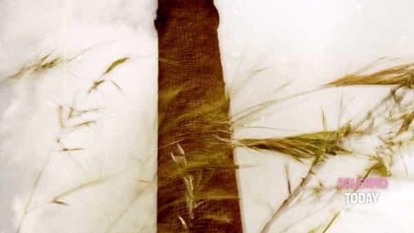 """mostra fotografica - """"un obiettivo sul sociale: pumex relinqui fotografie sul mondo dei lavoratori della pomice""""-4"""
