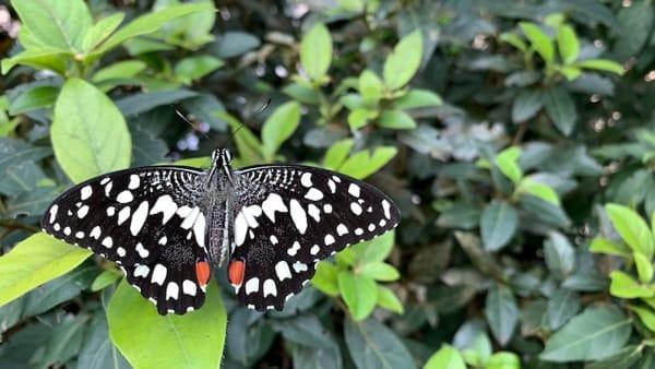 La casa delle farfalle fa il bis e torna al Museo Riso, sarà patrimonio dei palermitani