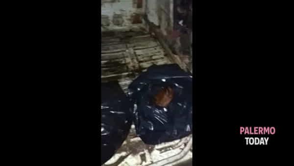 Era pronto a scaricare tra i rifiuti i resti della macellazione, l'intervento dei vigili | VIDEO