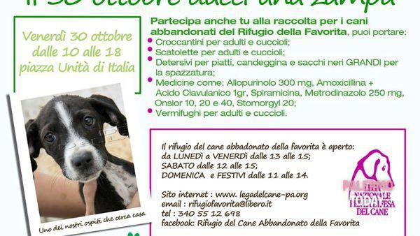 Rifugio Favorita, raccolta di viveri e farmaci in piazza Unità d'Italia