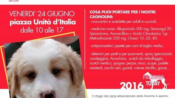 Raccolta di viveri e farmaci per il Rifugio del cane abbandonato in piazza Unità d'Italia