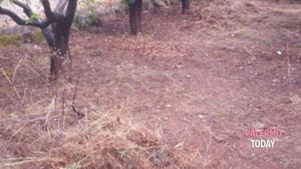 volontari dell'associazione produttori parco della favorita per salvare il polmone verde di palermo.-2