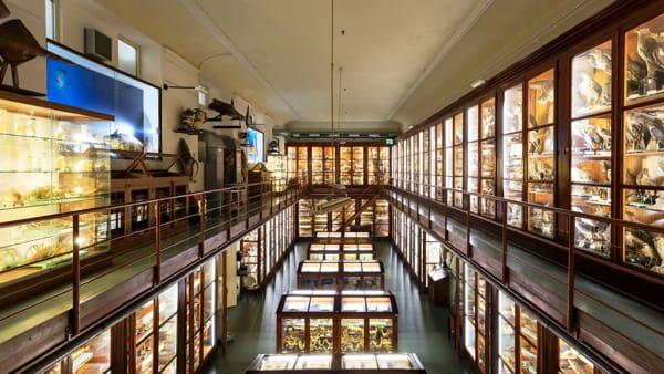 Notte europea dei musei, porte aperte e visite guidate al Doderlein e al Salinas