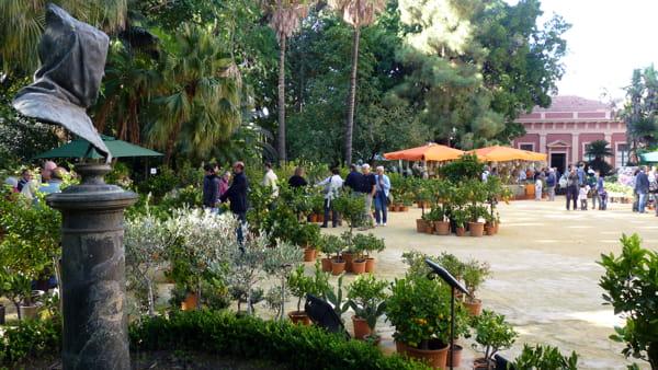 Zagara di Primavera, all'Orto Botanico la nuova edizione della mostra mercato