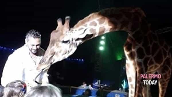 Acrobazie aeree, animali esotici, giochi, musica e show: al Forum il circo Nelly Orfei