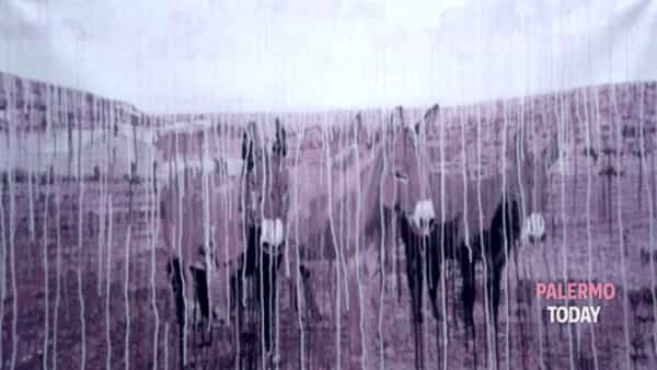 a palermo l'esposizione d'arte contemporanea 'scecchiscè' di giampaolo de filippi-2