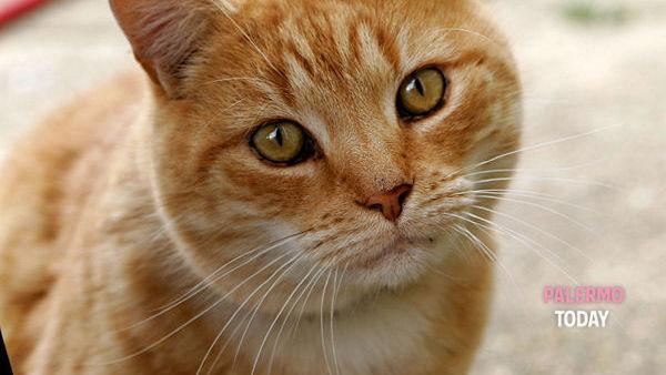 """Tutto quello che c'è da sapere sul mondo dei gatti, a Palermo arriva il """"Miao Festival"""""""