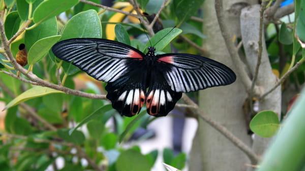 La Casa delle Farfalle arriva a Palermo, il Museo Riso si trasforma in un giardino d'inverno