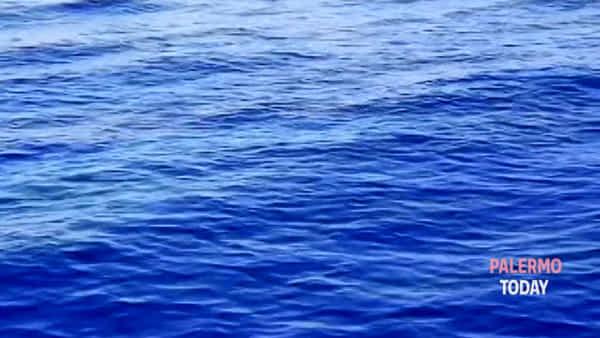 Sole, mare e... delfini: spettacolo nel mare dell'Addaura | VIDEO