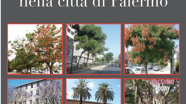 """""""Le alberature stradali nella città di Palermo"""", la presentazione alla libreria Broadway"""