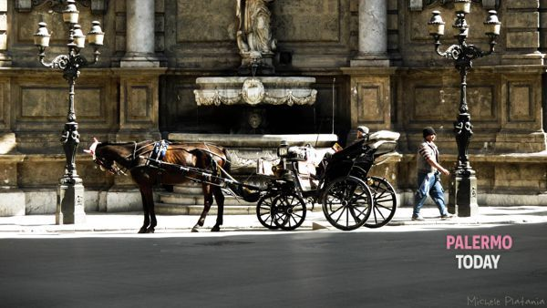 """Stop the carriages when the temperature reaches 35 degrees: """"This is how we protect the horses"""" thumbnail"""