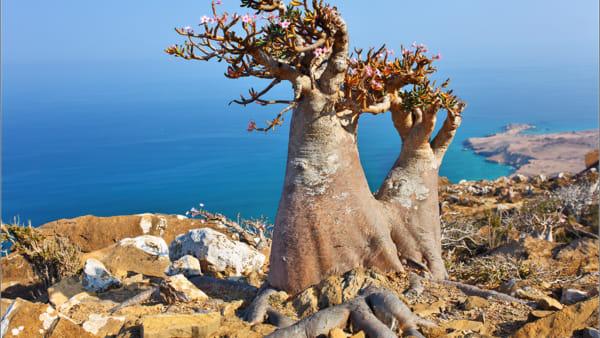 SocotrainSicilia, la cultura yemenita a Patrocinio Unesco: gli eventi all'Orto Botanico