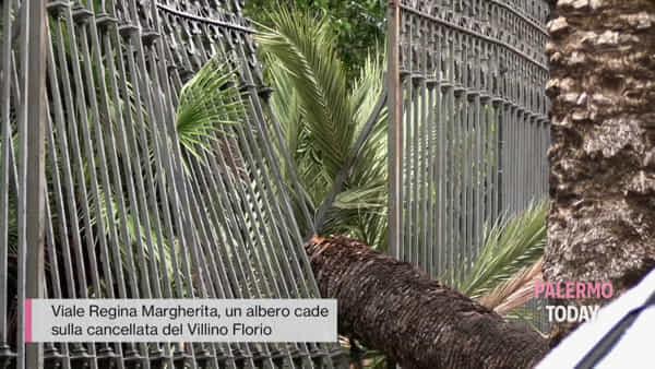 VIDEO | Piazza Due Palme dovrà cambiare nome, caduto lo storico albero: i danni del maltempo