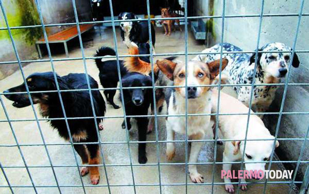 Incentivo Di 480 Euro A Chi Adotta Un Cane Animalisti Furiosi